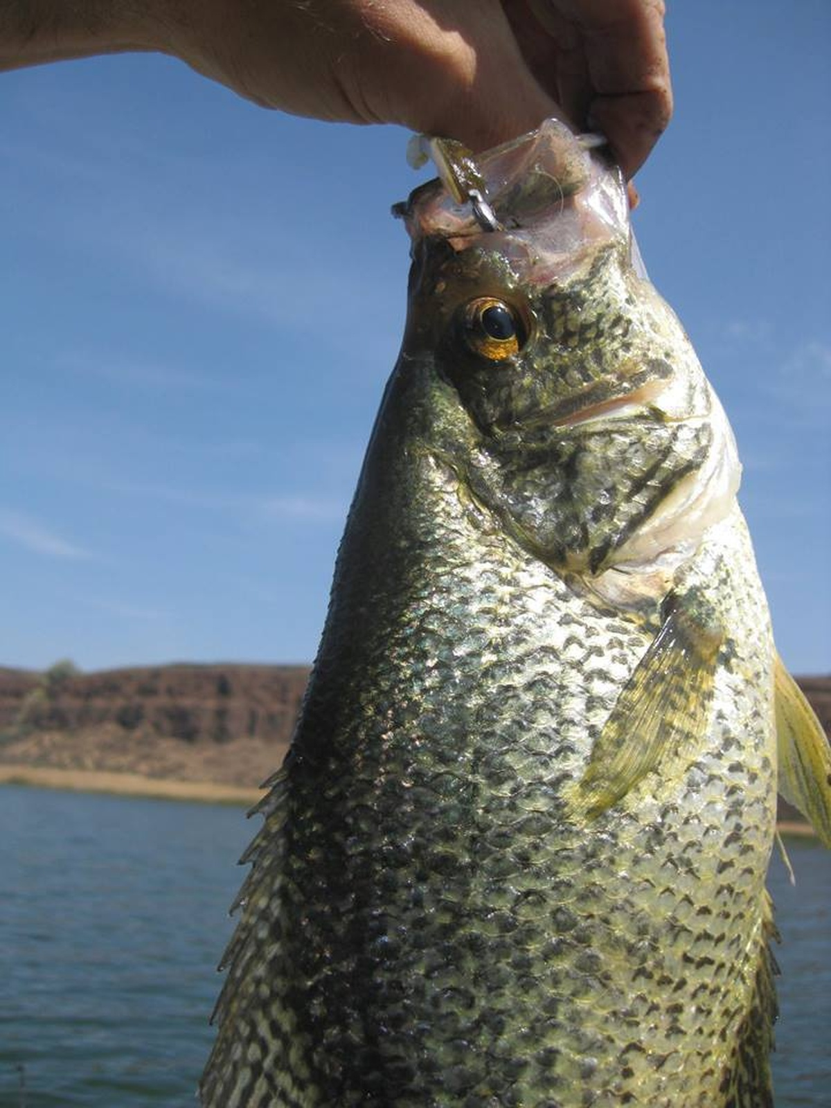 Brian's Weekly Minnesota Fishing Report | The Mighty 790 KFGO