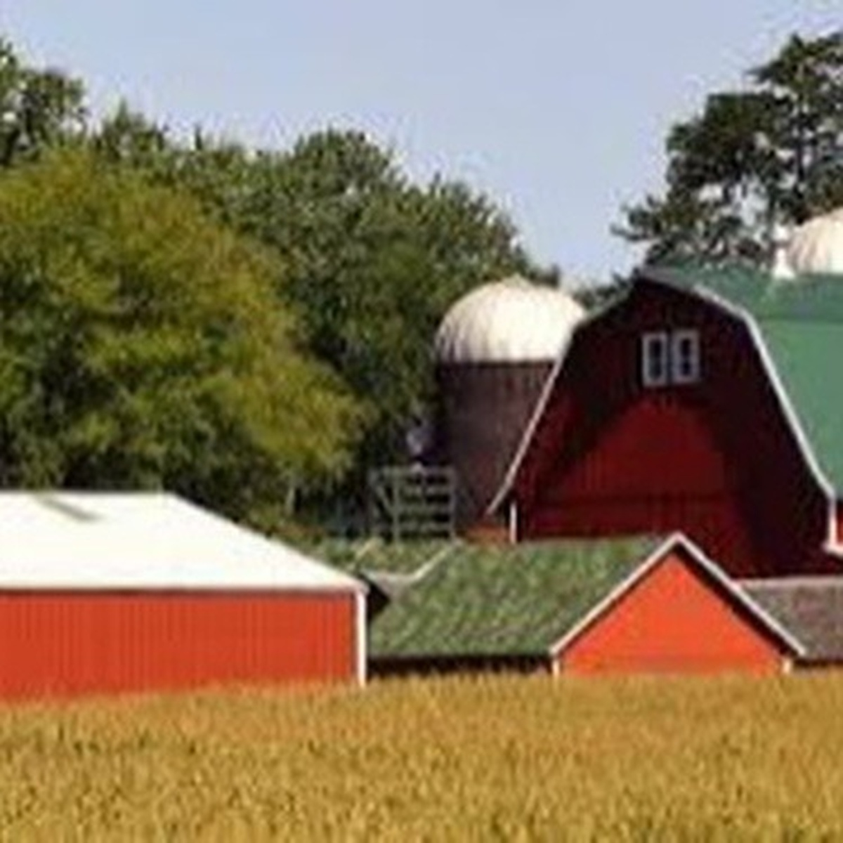 Branch County Ag Today: Carrie Preston-Project RED | WTVB