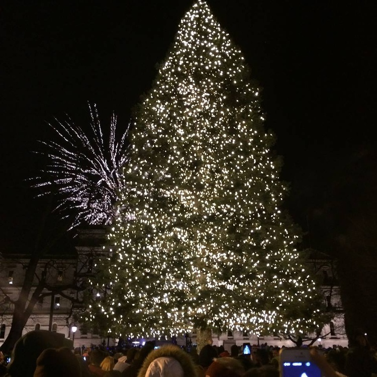 Christmas Tree at the Capital - Capital Christmas Tree Arrives In Lansing News Q106