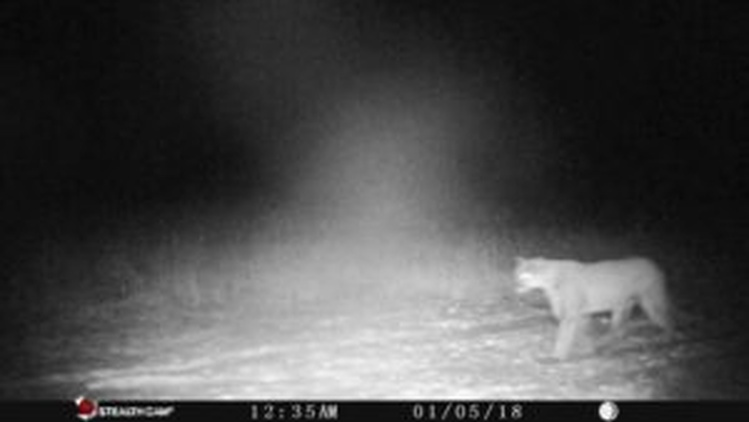 Cougar sighting in Northeast Wisconsin
