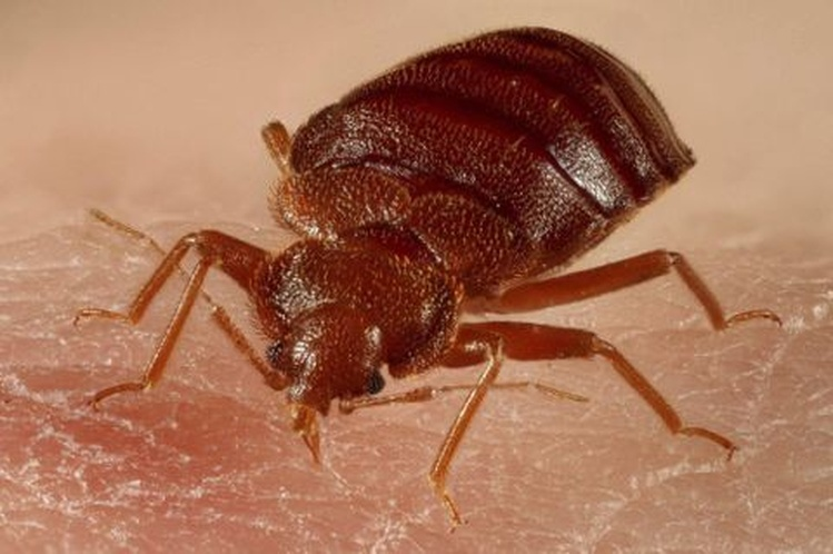 Bed Bug Problem At Wood County Apartment Complex News Wsau